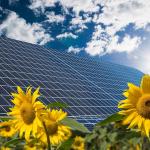 Photovoltaikanlagen hinter einem Sonnenblumenfeld